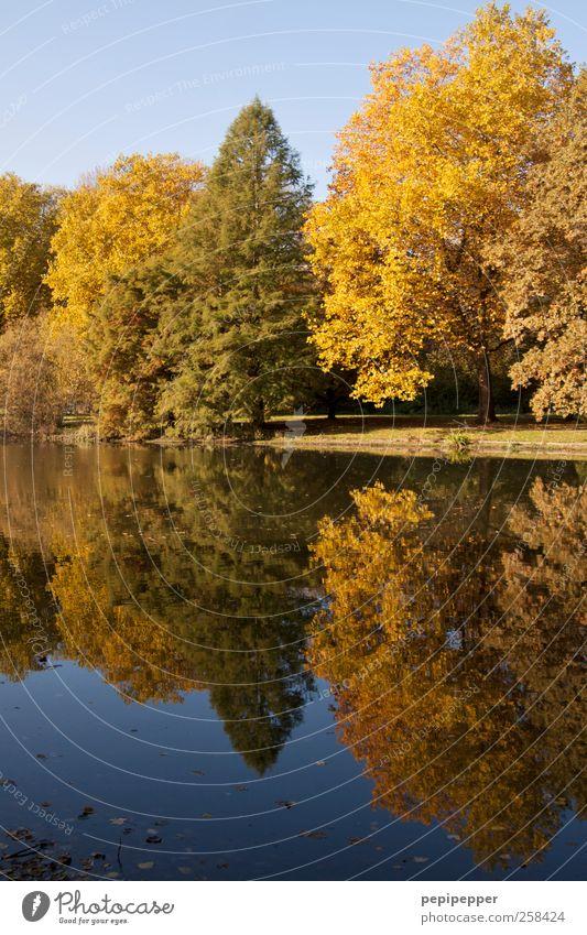 Indian summer Himmel Natur Wasser Baum Ferien & Urlaub & Reisen Pflanze Farbe ruhig Wald Erholung Landschaft Wiese Park Erde Freizeit & Hobby Schwimmen & Baden