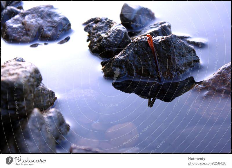 Steine zum Festhalten Umwelt Natur Wasser Bach Fluss wild blau Gelassenheit ruhig Hoffnung Steine im Wasser Farbfoto Außenaufnahme Tag Licht Schatten