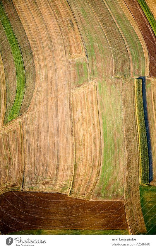 erdfarben Natur Pflanze Ferien & Urlaub & Reisen Tier Herbst Wiese Umwelt Landschaft Gras Erde Feld elegant leuchten Sträucher Urelemente Landwirtschaft
