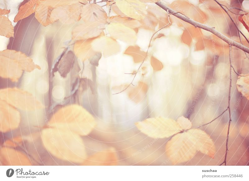 herbstblätter V Natur Blatt Wald Erholung Herbst Umwelt Holz Klima Jahreszeiten Pastellton