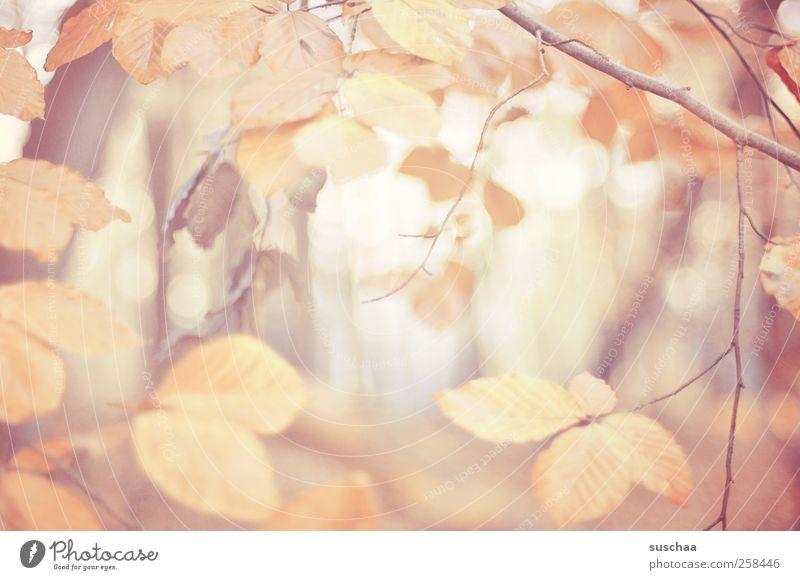 herbstblätter V Umwelt Natur Herbst Klima Blatt Wald Holz Erholung Äste Licht Pastellton Jahreszeiten Farbfoto Außenaufnahme Menschenleer Tag Unschärfe