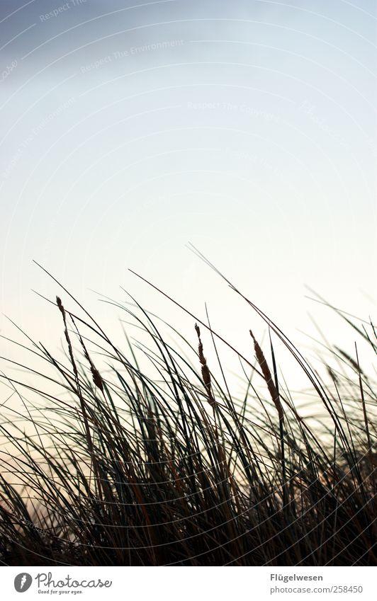 Bis Gras drüber wächst... Ferien & Urlaub & Reisen Pflanze Himmel (Jenseits) Meer Wiese Tourismus Freizeit & Hobby Sträucher Ausflug Schutz Ostsee Sportrasen