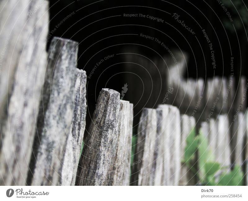 Sanfter Schwung Garten Pflanze Sträucher Grünpflanze Zaun Zaunpfahl Gartenzaun Pfosten Fliege Holzpfahl dunkel eckig natürlich grau grün schwarz weiß Schutz