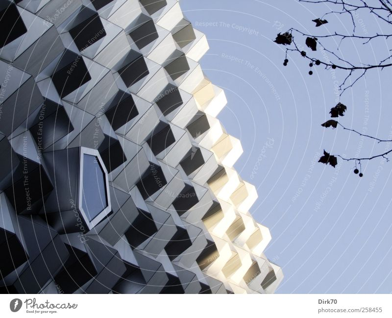 Natur und Struktur weiß Stadt Baum Blatt schwarz kalt Architektur Gebäude Metall Glas Fassade Beton Design modern kaufen Coolness