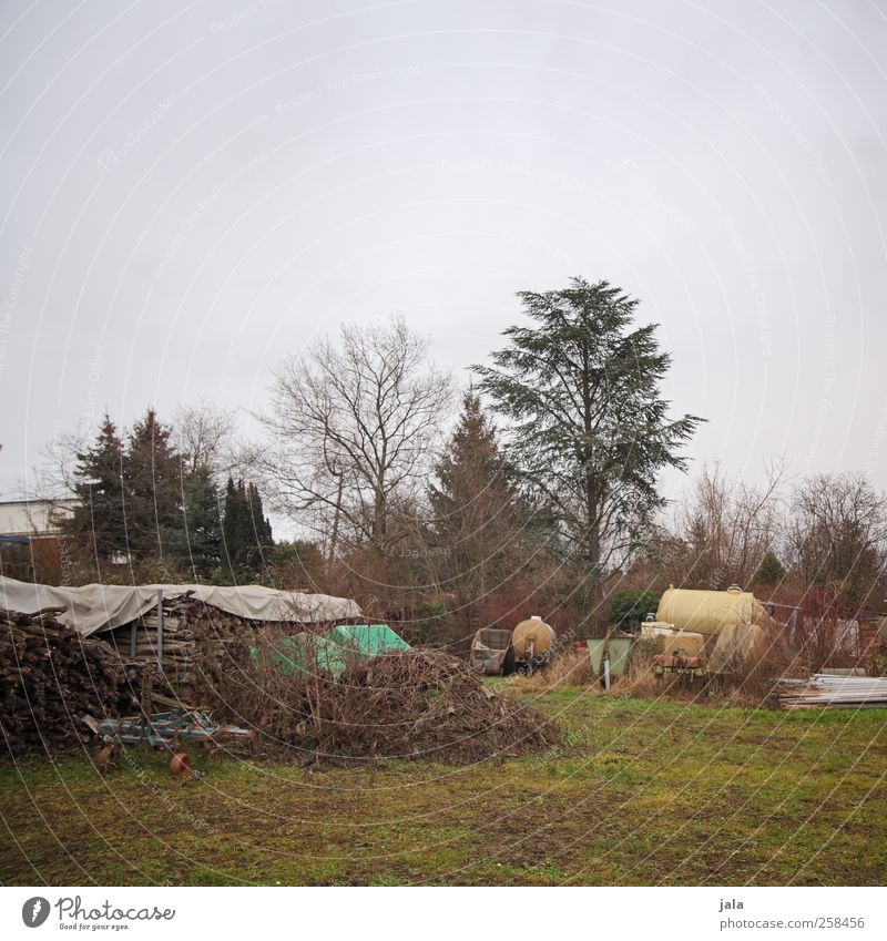 pampa Himmel Natur blau grün Baum Pflanze Winter Herbst Umwelt Landschaft Holz Gras braun natürlich trist Sträucher
