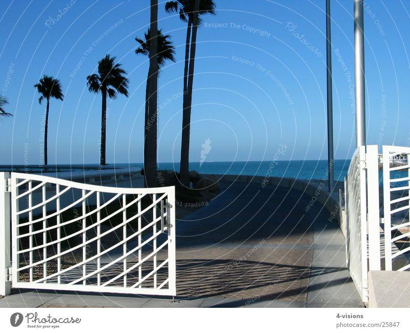 Tor Meer Ferien & Urlaub & Reisen Wege & Pfade Erfolg Aussicht Tor Palme Blauer Himmel Dubai