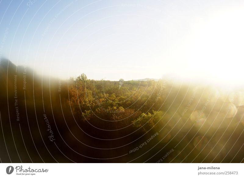 ... Spaziergang Natur Landschaft Pflanze Luft Himmel Horizont Sonnenaufgang Sonnenuntergang Schönes Wetter Baum Gras Sträucher Wald Ferne Wärme braun gelb gold