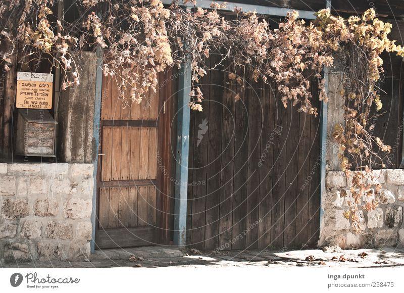 Seitenblick Umwelt Herbst Pflanze Blatt Grünpflanze Stadtrand Menschenleer Haus Mauer Wand Fassade Tür Briefkasten Holz Holztür schön Stimmung ruhig
