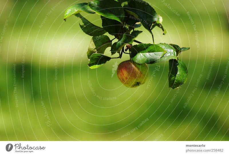 Pflück mich... Natur Pflanze grün Sommer rot Blatt Umwelt Wiese natürlich Gesundheit Lebensmittel Frucht Feld frisch authentisch Ernährung