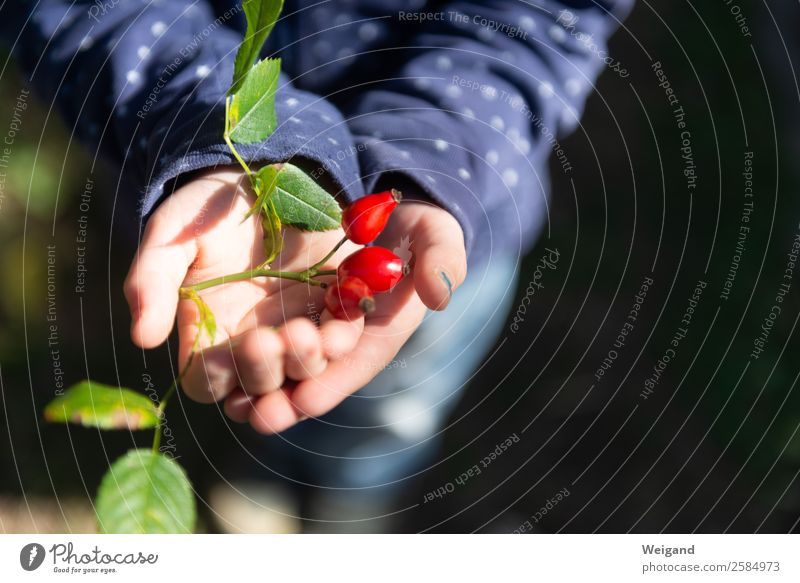 Rotgold Bioprodukte Zufriedenheit Sinnesorgane ruhig Meditation Kind Kleinkind Mädchen Kindheit Hand 1 Mensch träumen glänzend grau rot Vertrauen Schutz