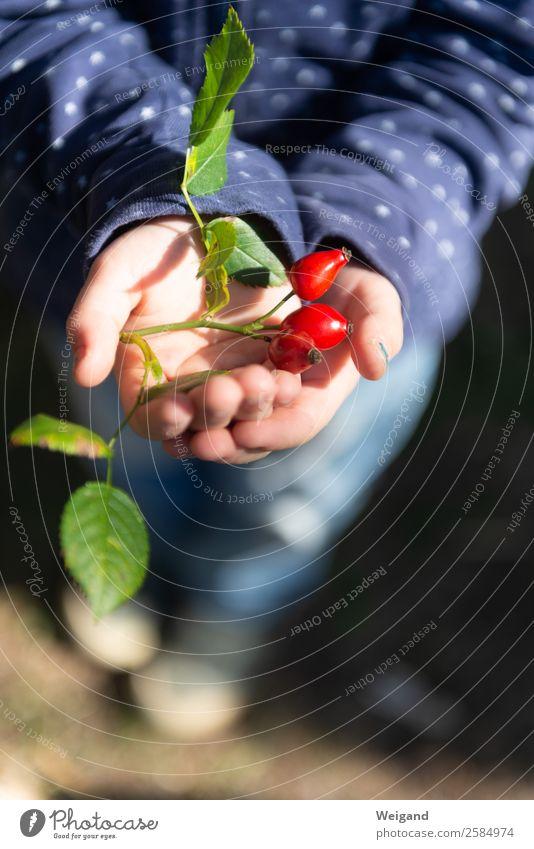 Herbstglück Lebensmittel Slowfood Tee harmonisch Zufriedenheit Sinnesorgane ruhig Meditation Duft Kindergarten glänzend Glück rot Gefühle Lebensfreude Vertrauen