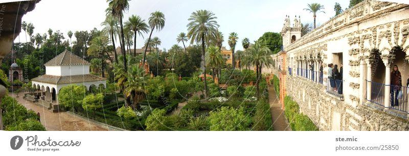 Garten Alcazar Sevilla grün Mauer Architektur Spanien Palme Andalusien Tempel Alcàzar