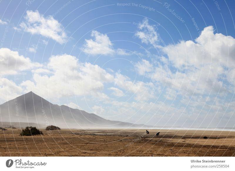 Cofete Himmel Natur Wasser Pflanze Meer Strand Tier Wolken Einsamkeit Ferne Landschaft Berge u. Gebirge Sand Küste Luft Vogel