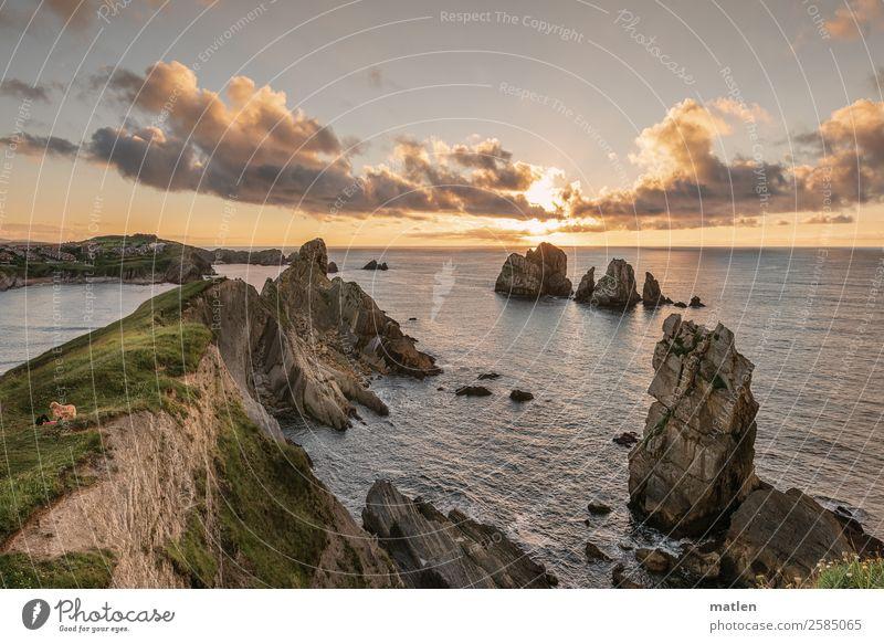 Der Hund Landschaft Pflanze Himmel Wolken Horizont Sommer Schönes Wetter Gras Felsen Wellen Küste Riff Meer eckig gigantisch blau braun grün orange rosa weiß