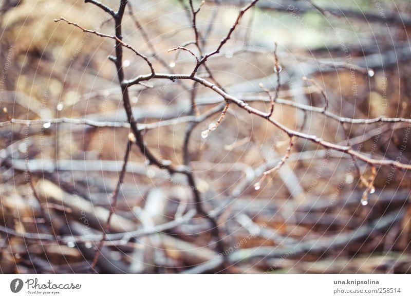 gestrypp Umwelt Natur Pflanze Wassertropfen Regen Sträucher Flüssigkeit nass natürlich skurril Ast Unschärfe Holz Farbfoto Gedeckte Farben Außenaufnahme