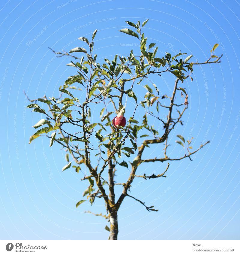 Last Order Erkenntnis Umwelt Natur Pflanze Himmel Herbst Schönes Wetter Baum Apfel Apfelbaum Apfelernte Fröhlichkeit natürlich schön selbstbewußt Leben Ausdauer