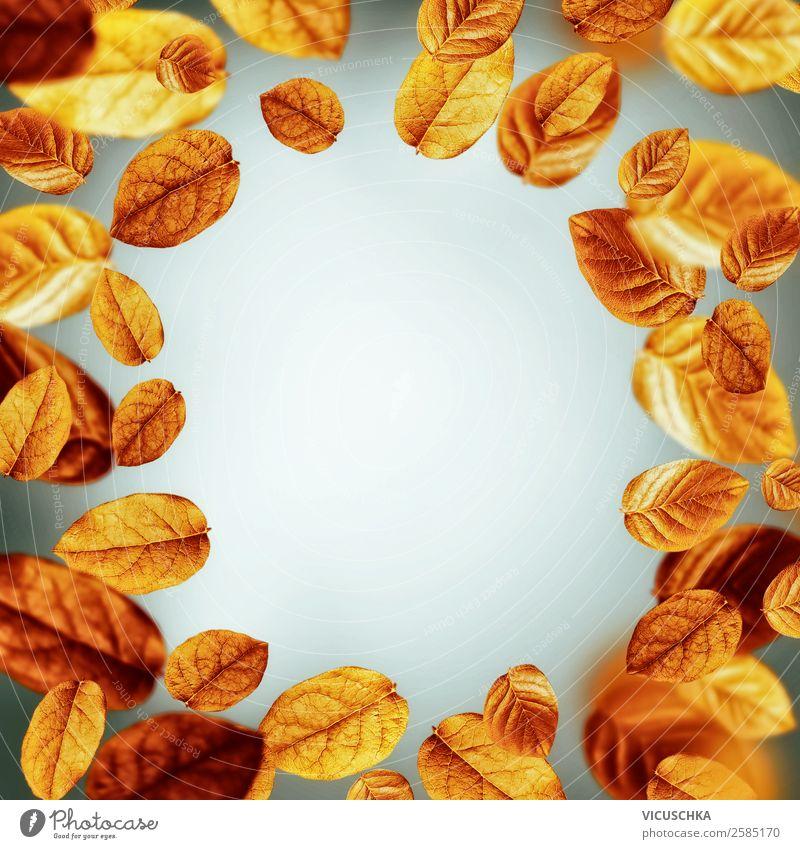 Herbst Hintergrund mit Laubblätter, Rahmen Stil Design Natur Wind Blatt Dekoration & Verzierung Ornament gelb Hintergrundbild orange fliegend grau Farbfoto