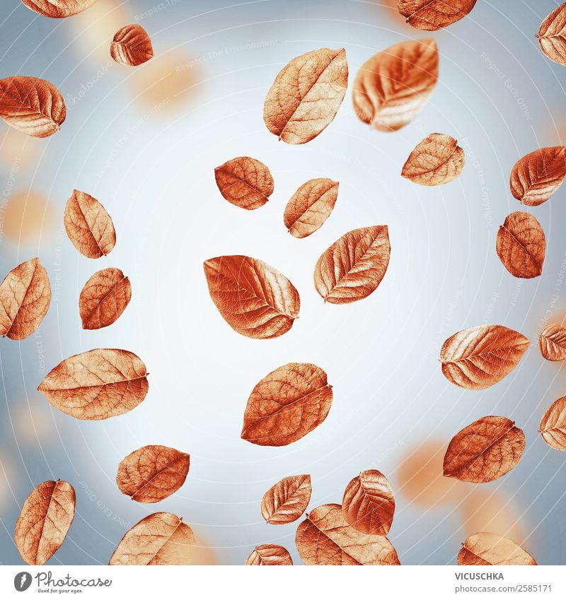 Fliegendes Herbstlaub auf grau Stil Design Erntedankfest Natur Wind Blatt Ornament trendy gelb September Oktober November fliegend Farbfoto Studioaufnahme