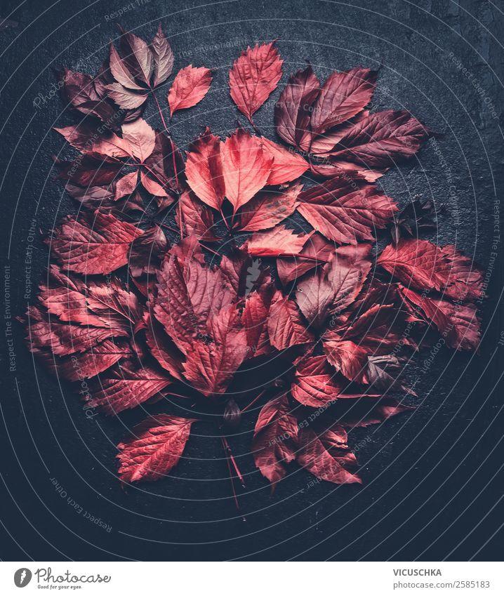 Rote Laubblättern auf schwarz Stil Design Garten Natur Herbst Blatt Blüte Dekoration & Verzierung Ornament Hintergrundbild rot Vor dunklem Hintergrund Muster