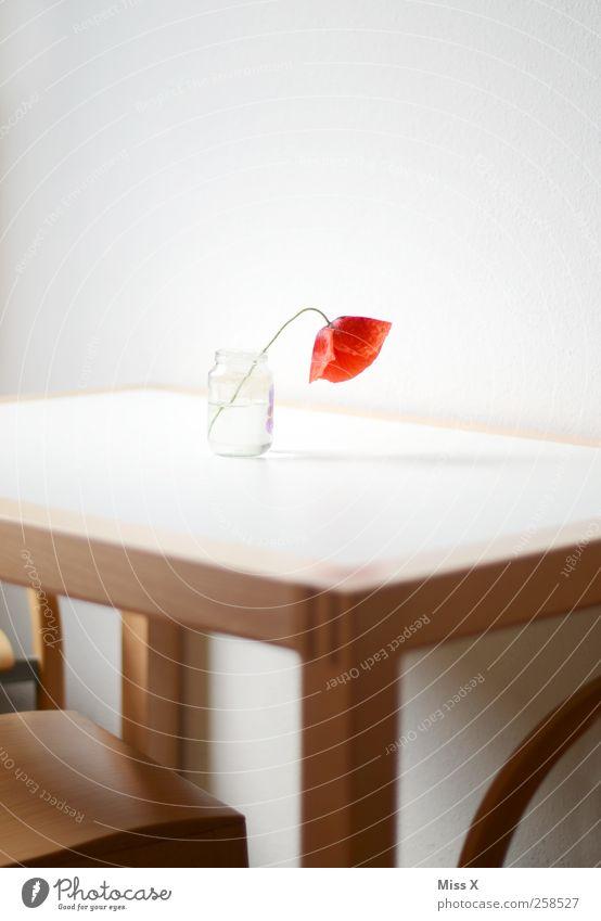 Stilles Blümchenfoto Innenarchitektur Dekoration & Verzierung Stuhl Tisch Blume Blüte Blühend Duft verblüht rot weiß Einsamkeit Blumenvase Mohn Mohnblüte