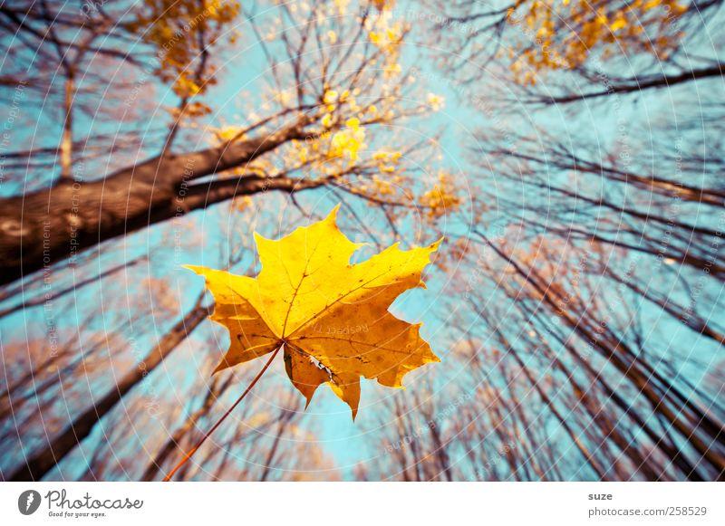 Air Mail Landwirtschaft Forstwirtschaft Umwelt Natur Landschaft Pflanze Urelemente Luft Himmel Herbst Klima Schönes Wetter Baum Blatt Wald fallen leuchten groß