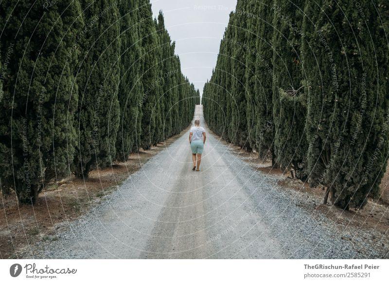 Zypressen Allee Landschaft grau grün Baum Perspektive Frau laufen Straße Zukunft Blick nach vorn Italien Toskana Ferien & Urlaub & Reisen Reisefotografie