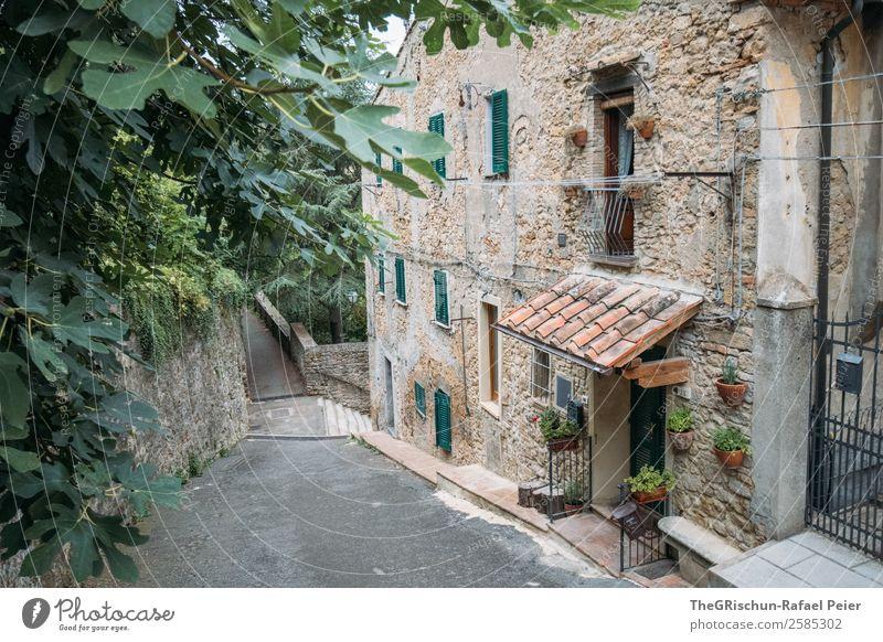 Haus Pflanze grün Baum Reisefotografie Fenster schwarz Stein braun grau Italien entdecken Dorf Kleinstadt Toskana