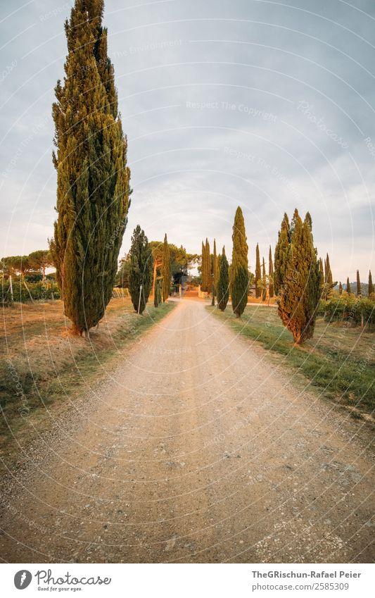 Zypressen Natur Landschaft blau grau grün Italien typisch Reisefotografie Toskana Allee Straße Kies Farbfoto Außenaufnahme Menschenleer Abend Dämmerung