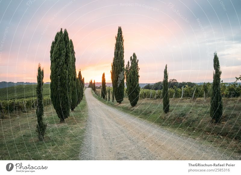 Sonnenuntergang Umwelt Natur Landschaft blau violett orange Toskana Italien Straße Stimmung Romantik Reisefotografie Wege & Pfade Kies Wein Zypresse Farbfoto
