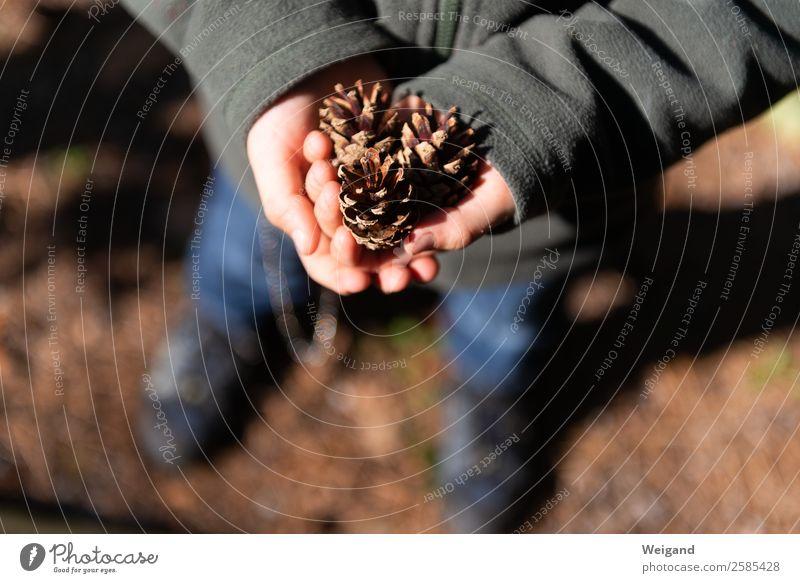 Kiefernzapfen Ferien & Urlaub & Reisen Kind 1-3 Jahre Kleinkind 3-8 Jahre Kindheit Umwelt Natur Herbst Holz braun achtsam Sammlung Wald Erfahrung Zapfen