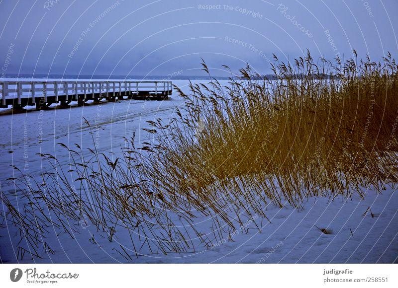 Winter am Bodden Umwelt Natur Landschaft Pflanze Eis Frost Schnee Gras Küste Seeufer Darß kalt Stimmung ruhig Anlegestelle Steg Farbfoto Gedeckte Farben