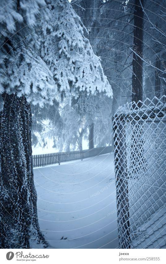 Grenzen Natur blau weiß Baum Winter schwarz Wald kalt Schnee Wege & Pfade Eis Frost Zaun Baumstamm Maschendrahtzaun