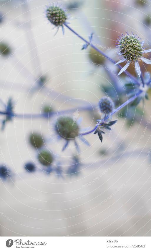 scharf-unscharf Natur Pflanze Blume Umwelt Sträucher