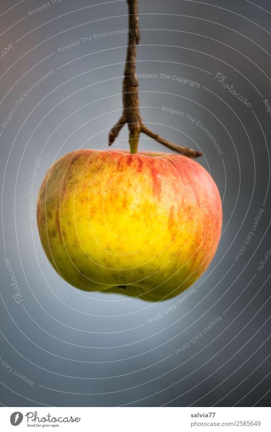 einfach mal abhängen Lebensmittel Frucht Apfel Ernährung Vegetarische Ernährung Natur Herbst Apfelstiel ästhetisch frisch lecker natürlich rund saftig gelb grau