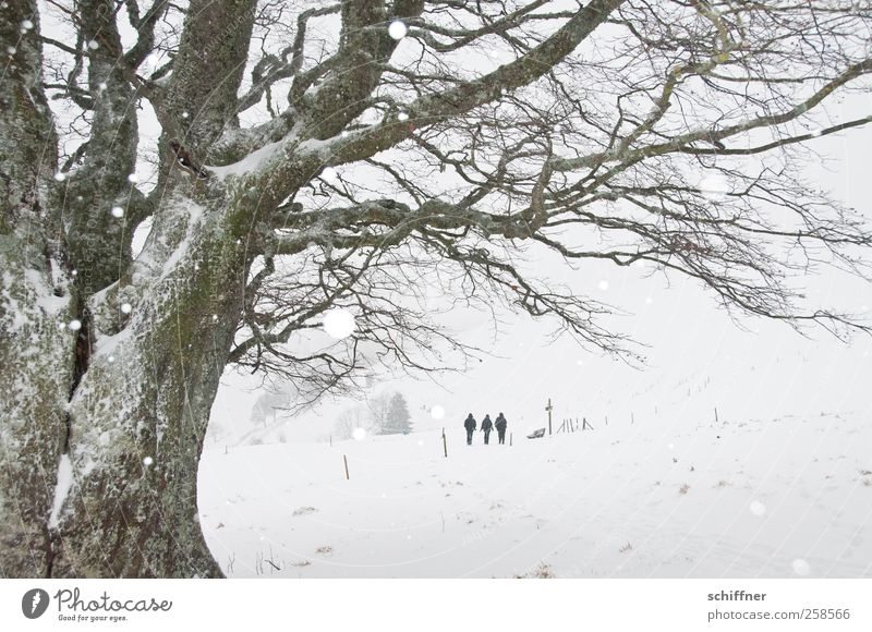 Baumloben | Heimweg Freundschaft 3 Mensch Landschaft Winter schlechtes Wetter Eis Frost Schnee Schneefall Pflanze gehen wandern kalt weiß malerisch Zaun grau