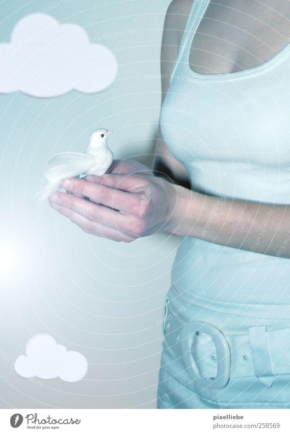 Lieber den Spatz in der Hand! feminin Junge Frau Jugendliche Finger Natur Luft Himmel Wolken Hose Gürtel Vogel Taube Flügel berühren fangen fliegen elegant frei