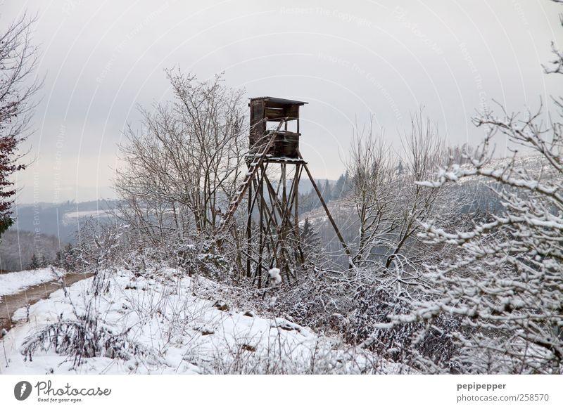Waidmanns Heil! Freizeit & Hobby Jagd Ferne Freiheit Winter Haus Landwirtschaft Forstwirtschaft Leiter Landschaft Pflanze Erde Wald Hochsitz kalt Jagdstand Tag