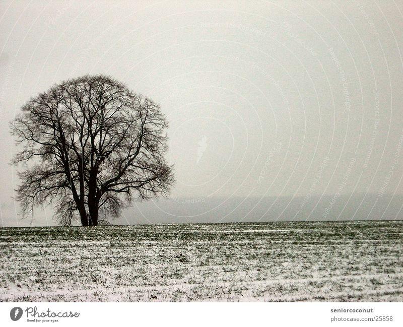 Kalt Baum Schnee Gras Nebel