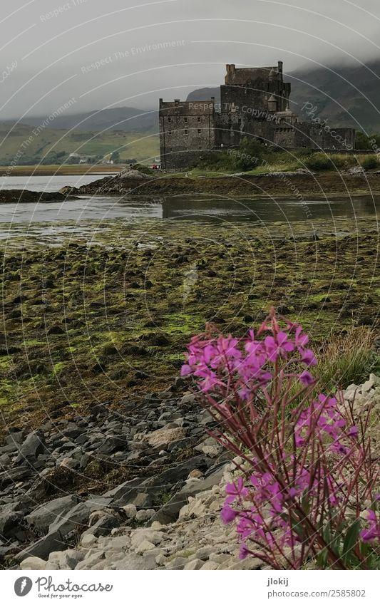 Scotland, Somewhere Natur alt Pflanze Landschaft Wolken Architektur Kraft Kultur Romantik Bauwerk Urelemente Burg oder Schloss Ruine schlechtes Wetter