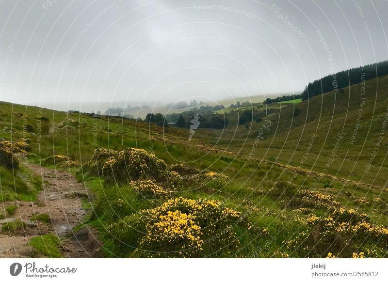 Scotland, Somewhere Natur Sommer Pflanze Landschaft Wolken Einsamkeit Ferne Wiese Freiheit Ausflug Regen wandern Nebel Abenteuer Urelemente Unendlichkeit