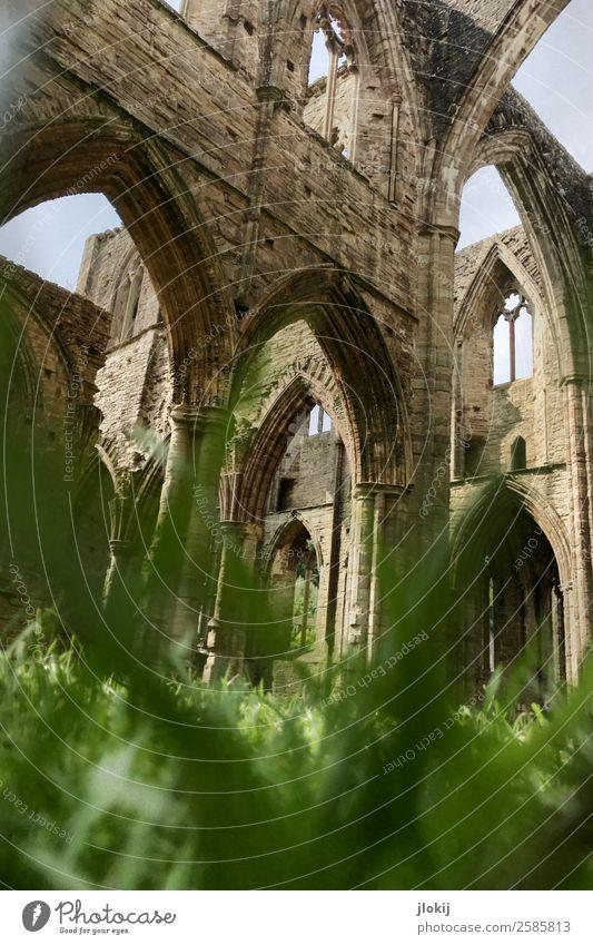 Transience Sightseeing Architektur Pflanze Wolken Sonne Sonnenlicht Sommer Schönes Wetter Gras Blatt Park Wiese Menschenleer Kirche Dom Ruine Bauwerk Gebäude