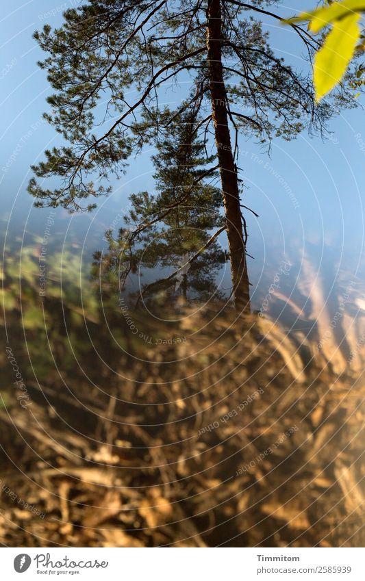 Herbst Umwelt Natur Pflanze Himmel Schönes Wetter Baum Blatt Wald blau braun grün Farbfoto Außenaufnahme Menschenleer Tag Reflexion & Spiegelung