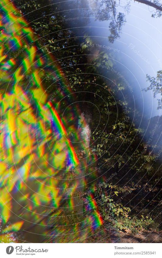 Waldspaziergang Himmel Natur Pflanze blau grün Blume Umwelt Wege & Pfade Gefühle Sträucher Spektralfarbe