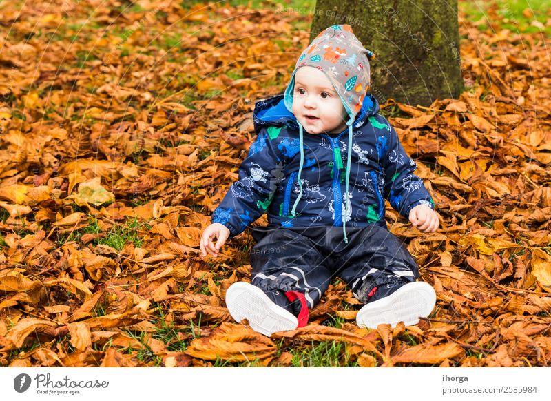 Ein Baby, das durch die Herbstblätter im Wald kriecht. Lifestyle Freude Glück schön Gesicht Kind Mensch Kleinkind Kindheit 1 0-12 Monate Natur Blatt Park