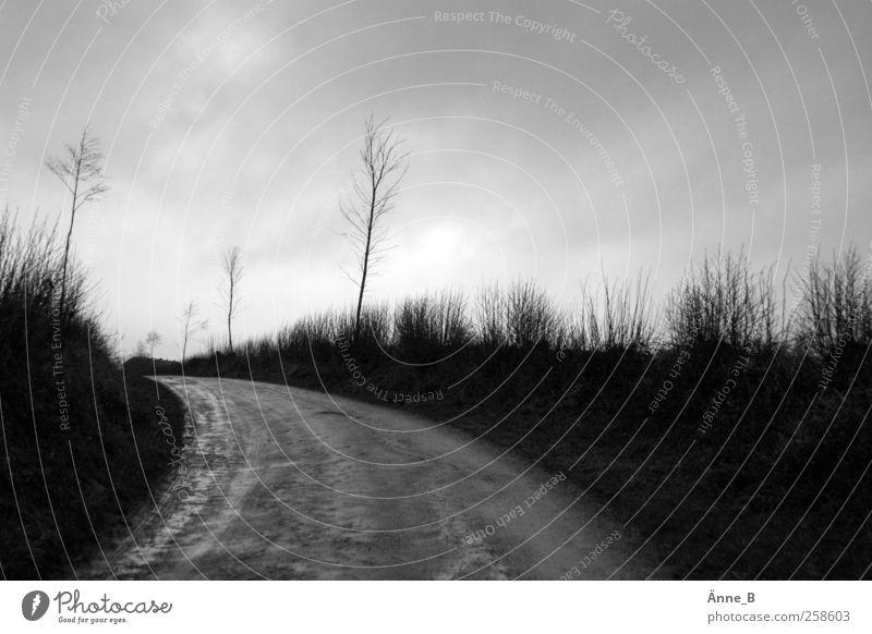 Entblättert Wolken Ferne Straße Wege & Pfade Linie Wetter Feld laufen wandern Ausflug trist Sträucher Vergänglichkeit Ziel Hügel Pfeil