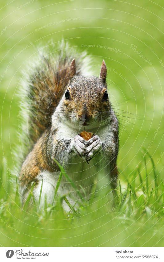 Natur schön grün Tier Essen natürlich lustig Wiese Gras klein braun grau wild Park stehen niedlich