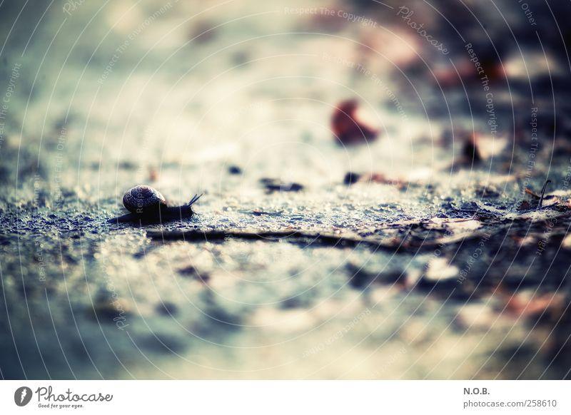 Ich Schaffe Es! Tier Herbst klein Geschwindigkeit Schnecke Willensstärke selbstbewußt geduldig achtsam Entschlossenheit Tapferkeit