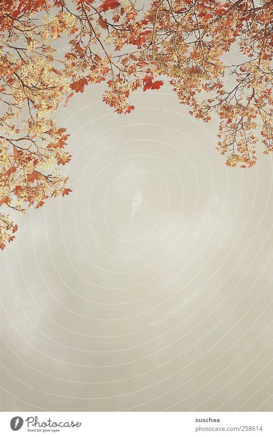 noch 64 tage ... Umwelt Natur Luft Himmel Wolken Gewitterwolken Frühling Klima Klimawandel Wetter Baum Stimmung Ast Blatt Schwüle Farbfoto Außenaufnahme