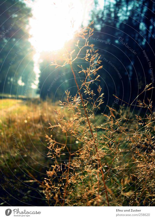 Waldspaziergang Natur Pflanze Sonne ruhig Wald Liebe kalt Wiese Landschaft Gras träumen natürlich Wachstum leuchten beobachten Schönes Wetter