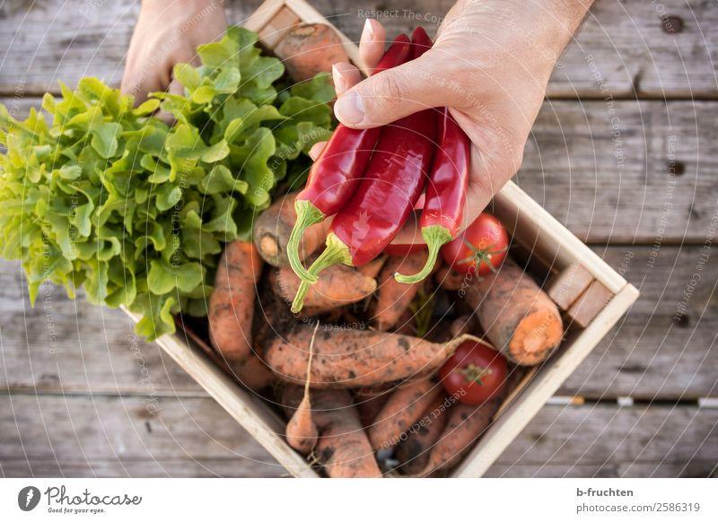 Gemüsekisterl Lebensmittel Salat Salatbeilage Ernährung Bioprodukte Vegetarische Ernährung Gesunde Ernährung Gartenarbeit Landwirtschaft Forstwirtschaft Mann